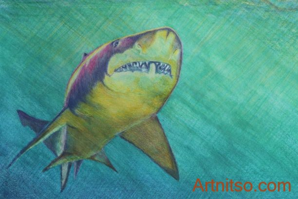 A coloured pencil drawing of a purple and yellow shark swimming alone in a blue green and yellow toned sea. ©Artnitso, Based on photograph by Zaven Hekimian (with permission).